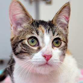 View Our Feline Care Information