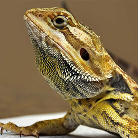 Reptile veterinarian near LAX