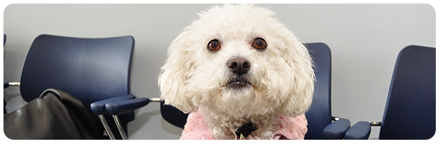Canine microchipping in Los Angeles California