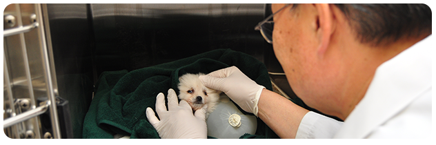 Canine spay and neuter at Westchester Veterinary Center
